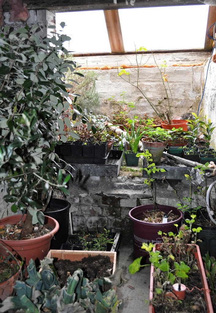 basement greenhouse from
