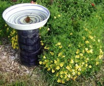 tagetes birdbath